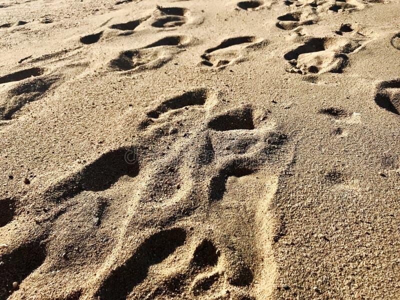Seascape bonito no mar azul no ar livre com areia amarela imagem de stock royalty free