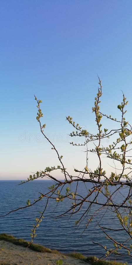 Seascape. The branches of the bush against the blue sea and cloudless sky. Background stock photography