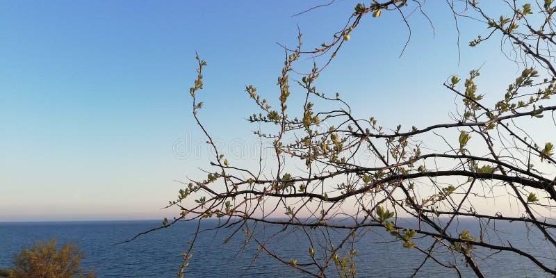 Seascape brilhante Os ramos do arbusto contra o mar azul e o céu sem nuvens Fundo fotografia de stock