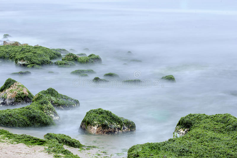Seascape. Cloudy water seascape with rocks and green algae stock image