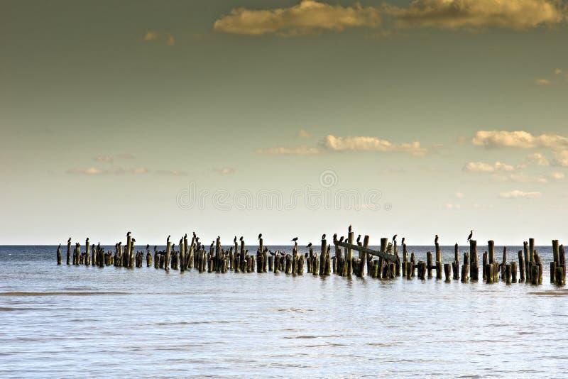 Seascape com um cais de madeira e os cormorants. foto de stock royalty free