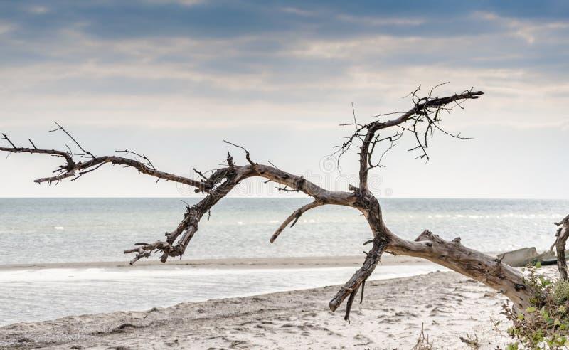 Seascape com uma árvore secada no primeiro plano fotografia de stock