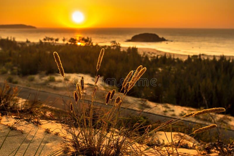 Seascape da natureza com ideia de Sun de incandescência através de Bush selvagem no nascer do sol alaranjado lindo