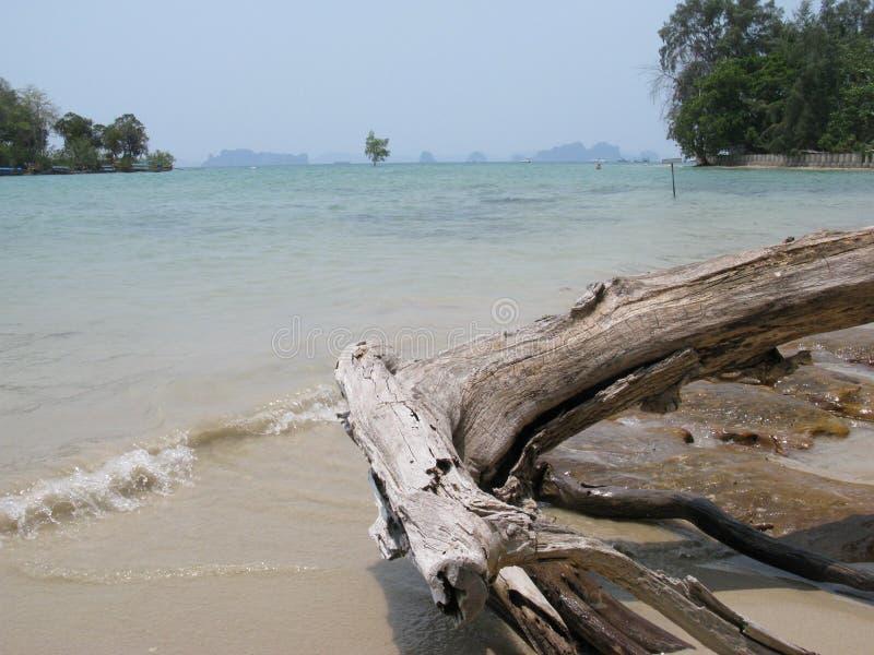 seascape da praia de Tailândia do krabi com madeira inoperante fotos de stock