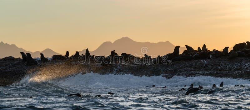 Seascape de la tormenta en la mañana La colonia de focas en la isla rocosa del océano Olas que rompen en aerosol en una isla de p imagen de archivo