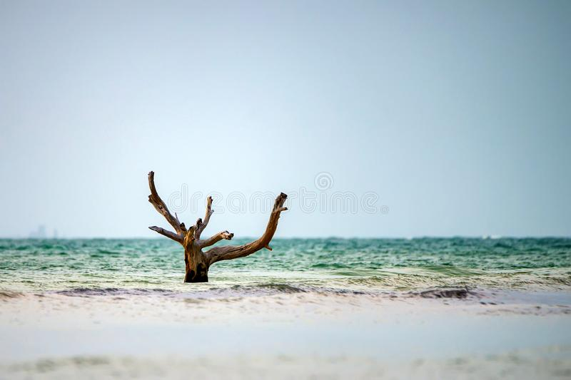 Seascape with dead tree stock photo