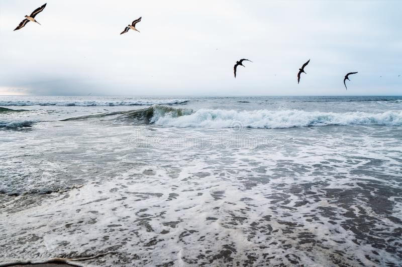 Dramatic Sea and Flock of Flying Birds royalty free stock photography