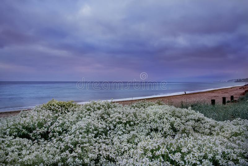 Seascape in the early morning. lush blooming wild flowers on the Black Sea beach. Odessa. Ukraine stock image