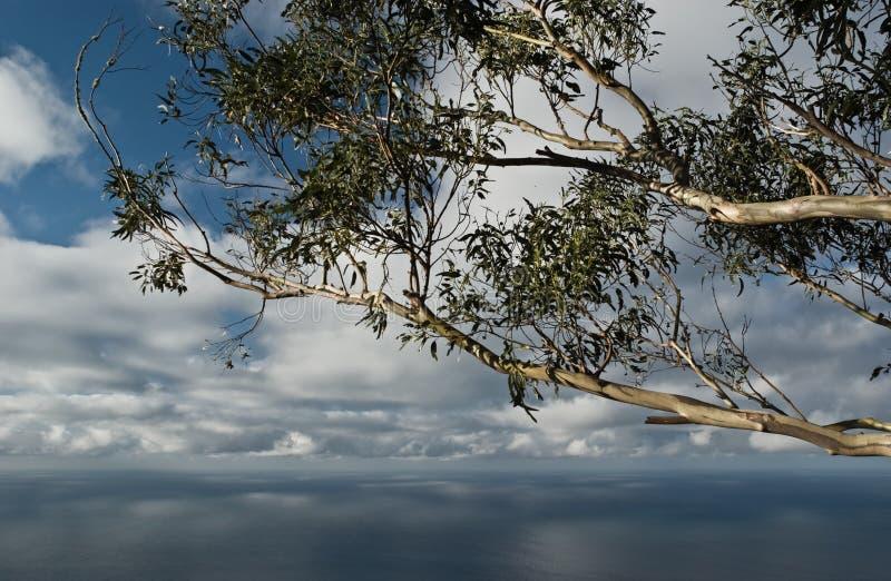 Download Seascape With Eucalyptus Tree Stock Photo - Image: 15913318