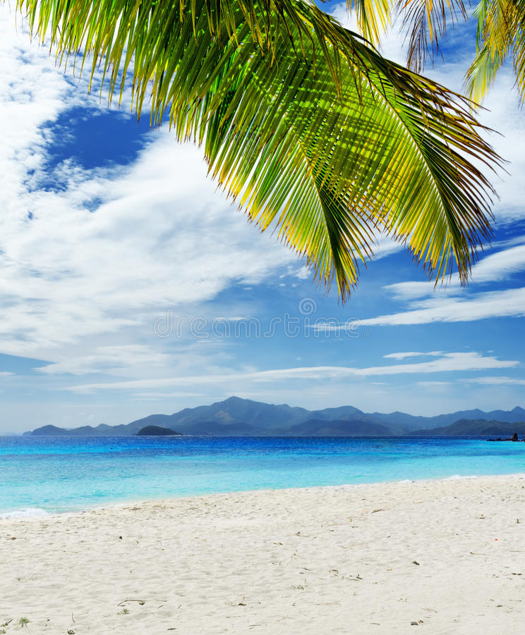 Download Green Tree On  White Sand Beach Stock Photo - Image: 34665396