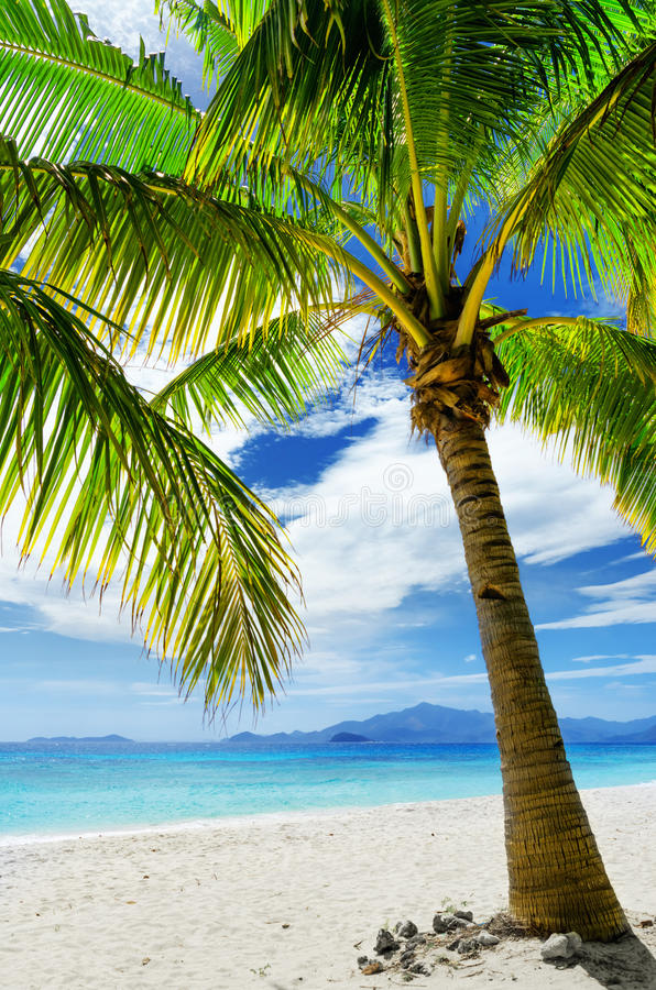 Download Green Tree On White Sand Beach Stock Photo - Image: 34665440