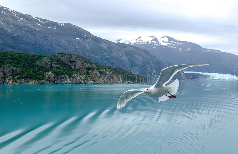 Seascape with Gull Flying in Foreground in Glacier Bay Alaska stock photos