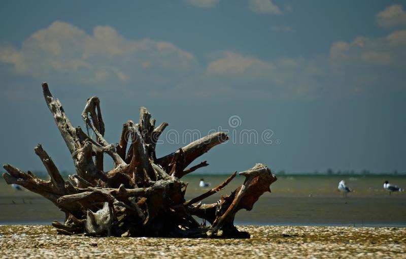 Seascape - a huge root with fishing nets lies on a sandy seashore strewn with shells. Ukraine beach blue coast island nature sky boat landscape tropical stock photography