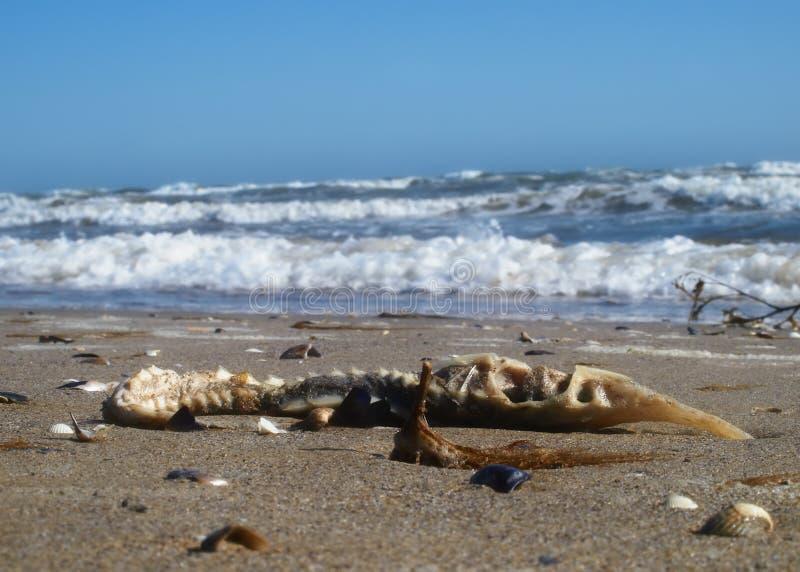 Seascape i en storm royaltyfria bilder
