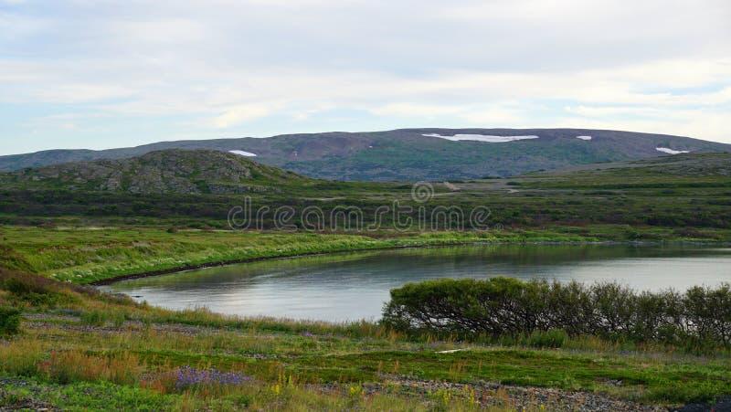 Seascape i tundra w lecie fotografia stock
