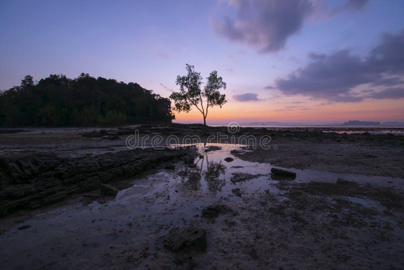 Seascape linii brzegowej zmierzchu krajobrazu widok z drzewem i plażą przy półmrokiem zdjęcia royalty free