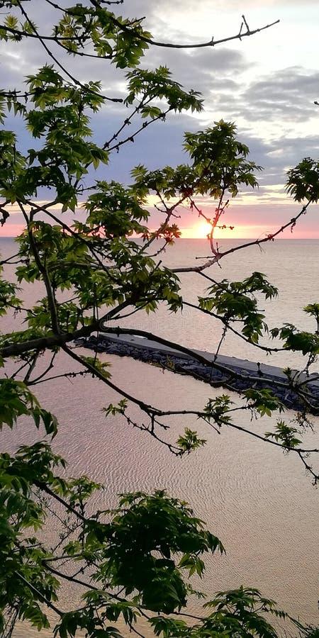 seascape Malowniczy zmierzch przez zielonych liści drzewa T?o obraz stock