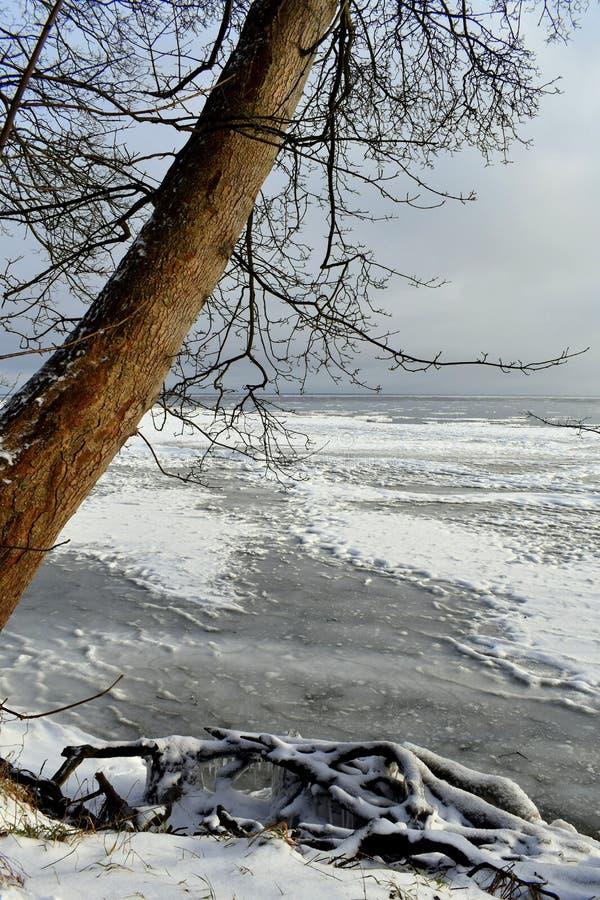 Seascape med det ensamma trädet och den trevliga aftonen tänder på vintertid royaltyfri fotografi