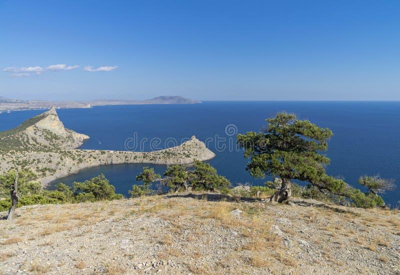 Seascape med relictenträd crimea royaltyfri fotografi