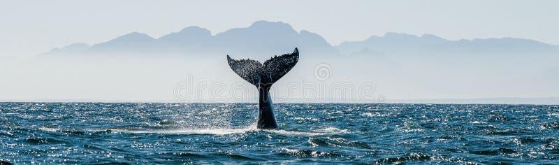 Seascape med valsvansen royaltyfri bild