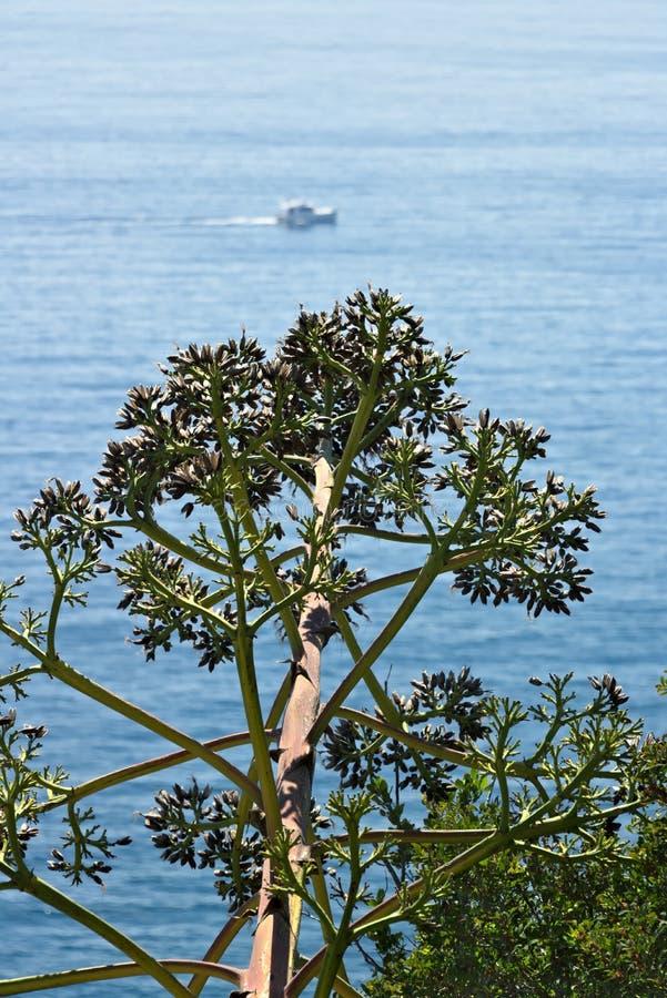 Seascape nära Cinque Terre i Liguria En Agaveblomma i förgrunden och ett blått hav med vågor och vaggar By av fotografering för bildbyråer