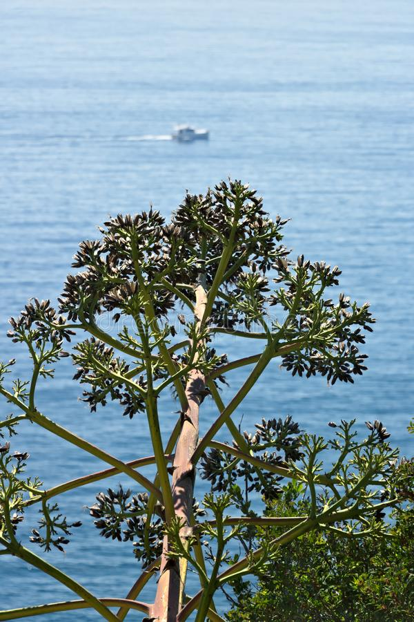 Seascape near the Cinque Terre in Liguria. An Agave flower in the foreground and a blue sea with waves and rocks. Village of stock image