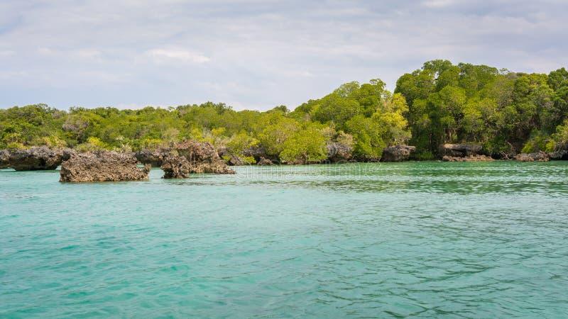 Seascape och mangrovar Zanzibar royaltyfri foto