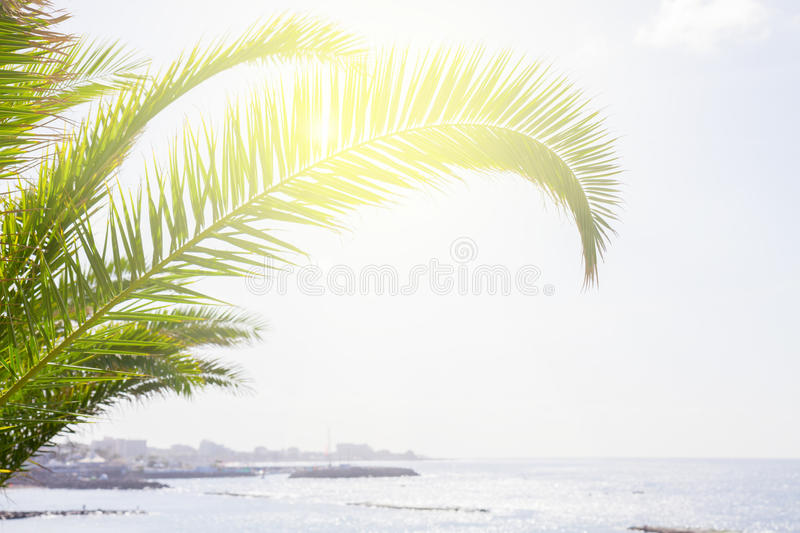 Seascape with palm tree stock photography