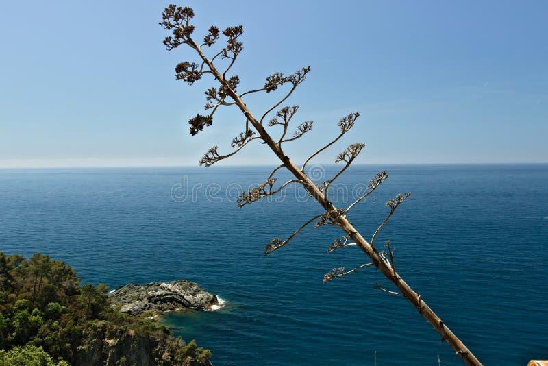 Seascape perto de Cinque Terre em Liguria Uma flor da agave no primeiro plano e um mar azul com ondas e rochas imagem de stock