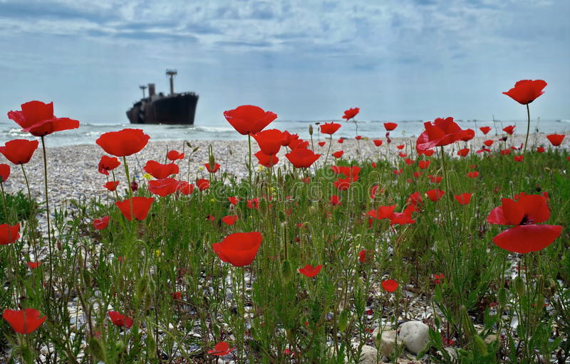 Seascape with red poppies on the Black Sea. Landmark attraction in Costinesti, Romania: Evangelia shipwreck stock photos