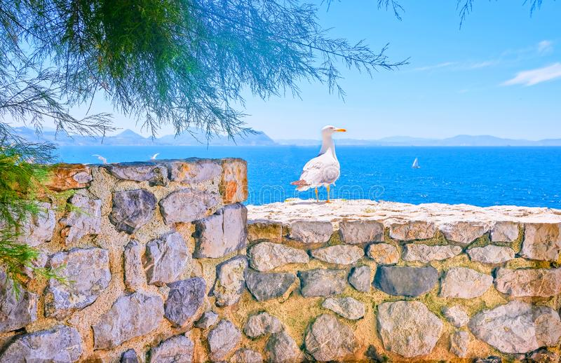 Seascape with Seagull sitting on the wall of the old fortress stock images