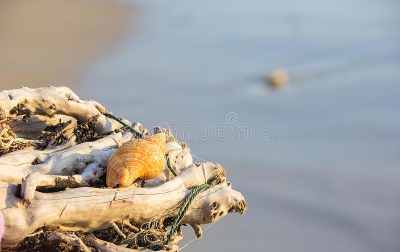 Seascape and shell royalty free stock image