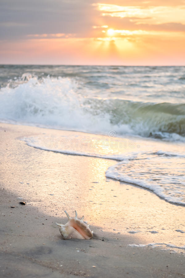 Seascape with Shell and Sun stock photography