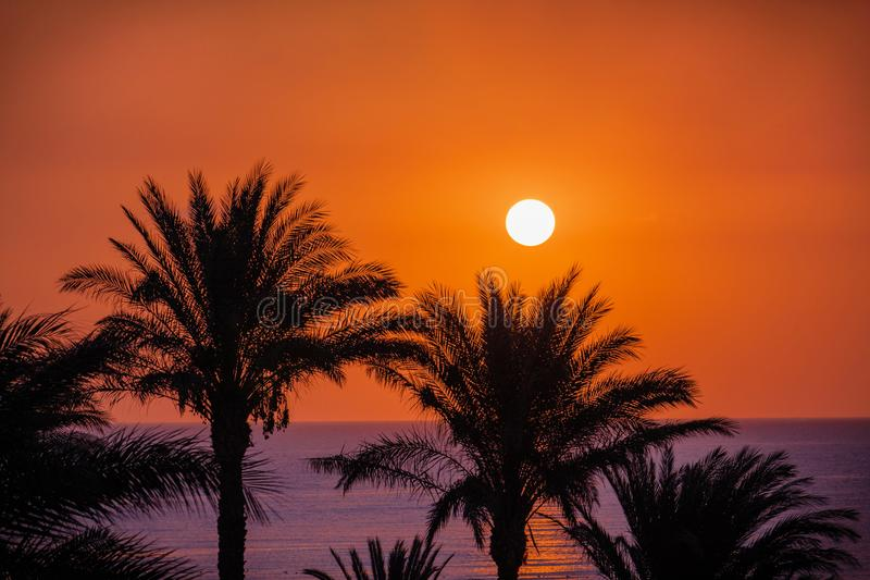 Seascape with sun on beautiful bright sky and silhouette of palm stock photography
