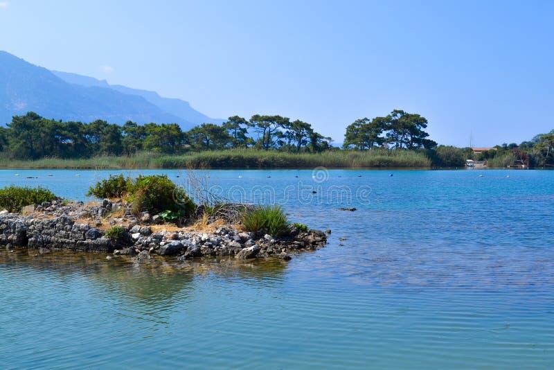 Seascape Tira litoral com plantas Teste padr?o floral da baleia (sem emenda Turquia Oludeniz fotos de stock royalty free