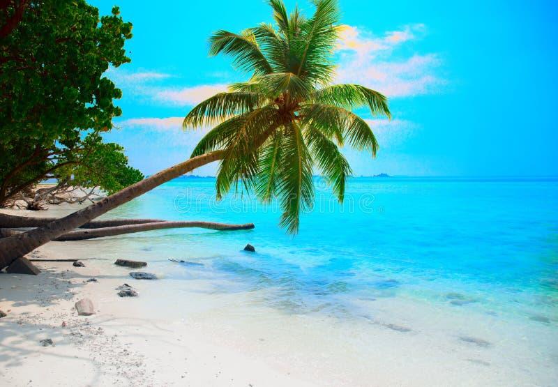 Seascape tropical com as folhas verdes e a vista para o mar da palmeira foto de stock