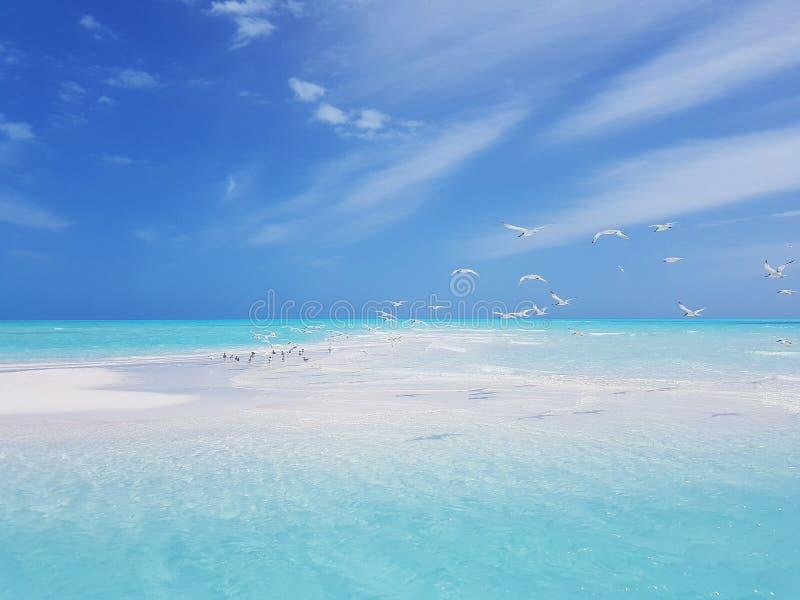 Seascape tropical romântico imagem de stock