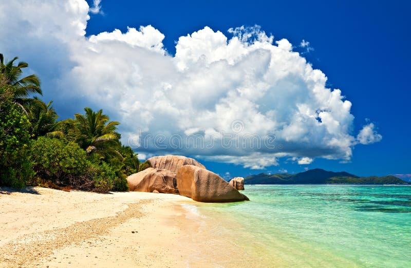 Download Seascape view stock photo. Image of palm, coast, shore - 23385986