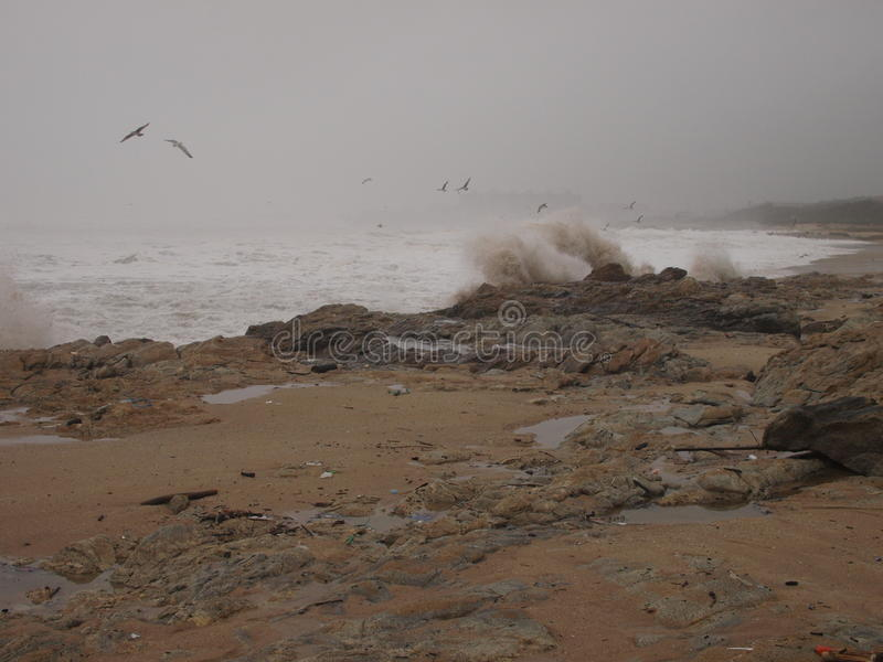Seascape on winter with wave spalsh royalty free stock photography