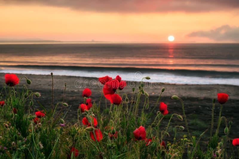 Seascape z maczkami zdjęcie stock