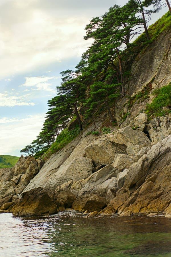 Seascape z skałami i gajami reliktowa sosna zdjęcie stock