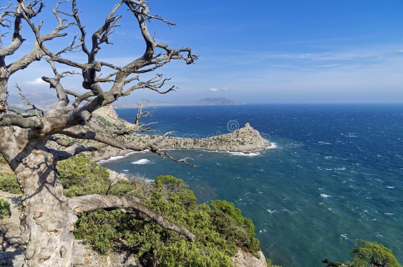 Seascape z wysuszoną sosną Crimea, Wrzesień obrazy stock