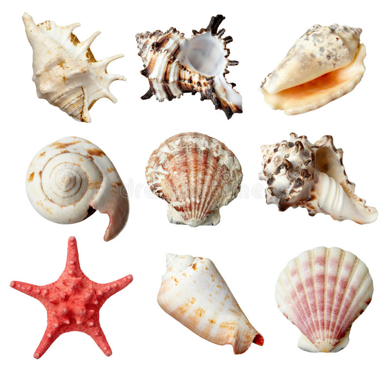 Seashel imagen de archivo