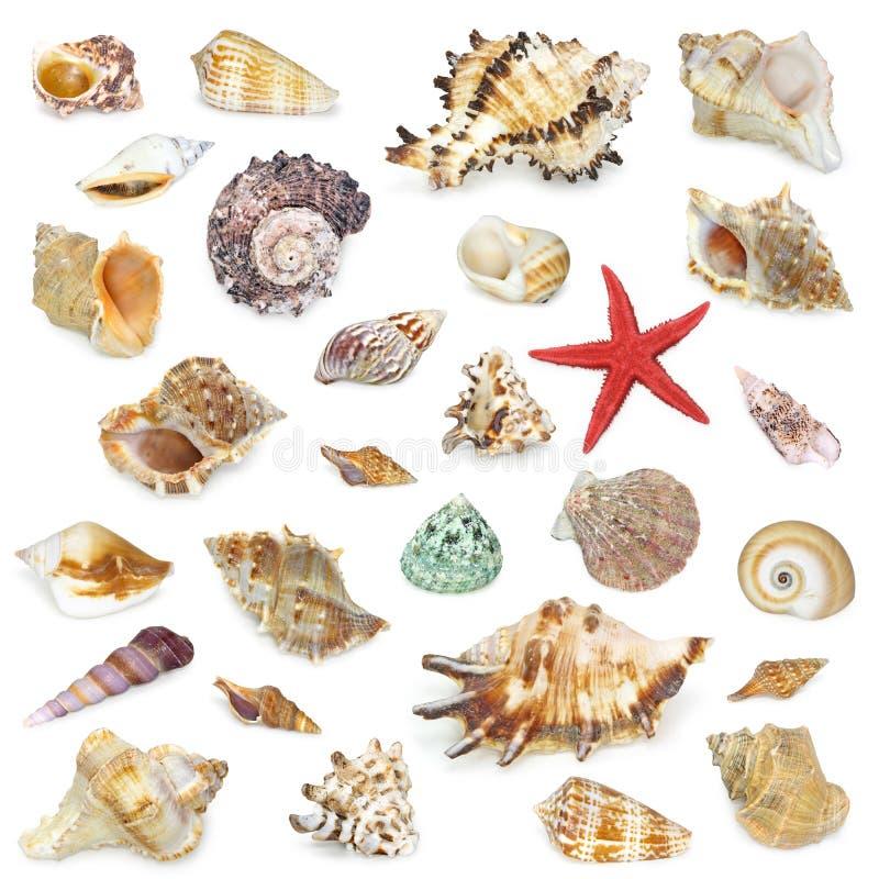Seashel Ansammlung lizenzfreie stockfotografie