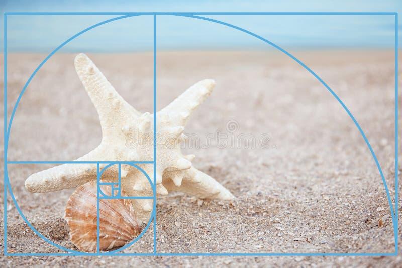 Seashell и морские звёзды в песке на пляже стоковое изображение