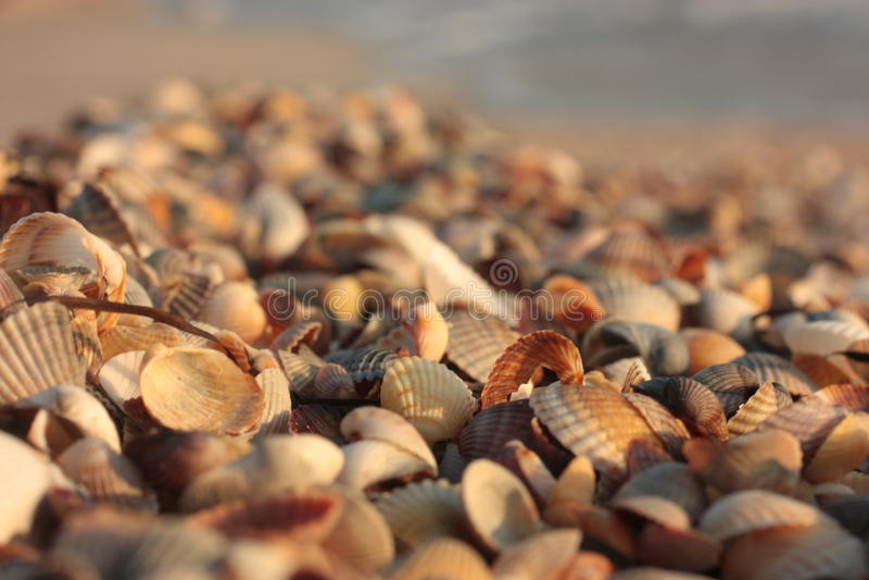 seashell Υπόβαθρο Φύση σύστασης, παραλία στοκ φωτογραφία