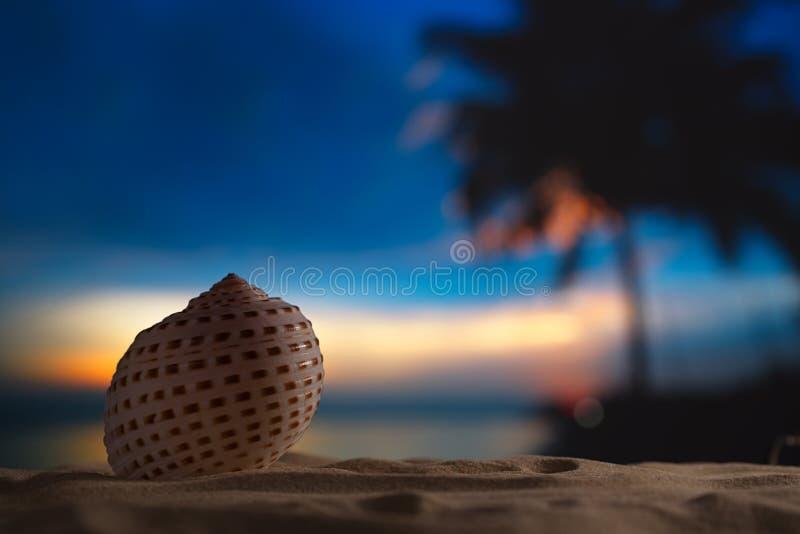 Seashell в море, восход солнца, темный свет стоковое фото rf