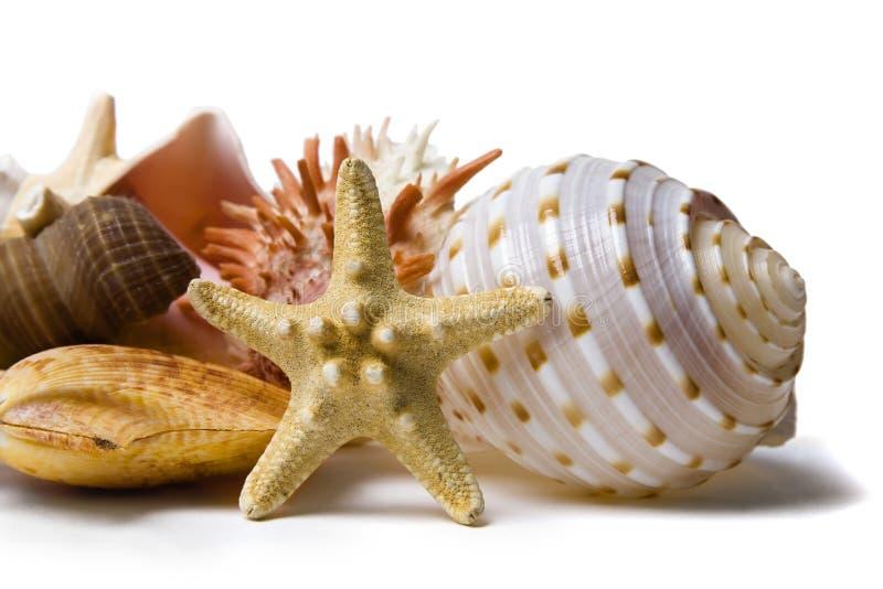 seashell жизни все еще стоковые изображения rf