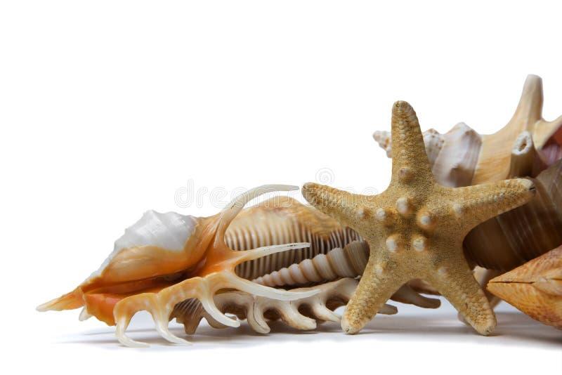 seashell жизни все еще стоковые фотографии rf