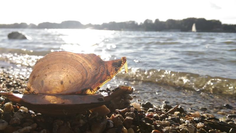 Seashell и река позади стоковое фото